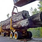 Кузнецкие полицейские вернули пропавший лесовоз