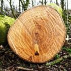 В Сеть попало видео подозрительной вырубки деревьев в центре Пензы