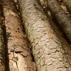 В Пензенской области «бессердечный» дровосек задолжал приставам 17 миллионов