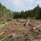 Саратовец выплатит около миллиона рублей за уничтожение деревьев в Пензе