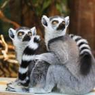 В пензенский зоопарк приглашают за полцены