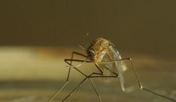 Заключенные ИК №4 спасут пензенскую больницу от комаров