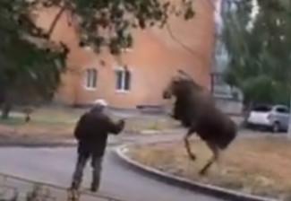 В Пензенской области лось замахнулся копытом на мужчину