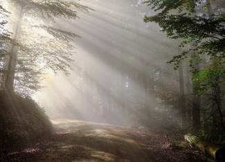 В Пензенской области пенсионер и ребенок заблудились в лесу