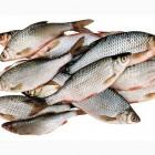 Сотрудники Россельхознадзора забраковали речную рыбу на пензенском рынке