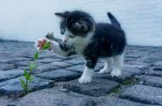 На жительницу Никольска завели уголовное дело из-за бездомных кошек