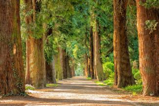 В Пензе создадут лесопарковый зеленый пояс города