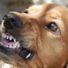 «Было видно лобовую кость»: огромная собака вцепилась в лицо ребенку