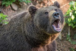 Смерть от зубов хищника: медведь разорвал женщину и ее десятимесячного ребенка