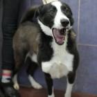Полицейские выяснили, что «взорванного» в Бессоновке пса никто не взрывал