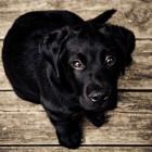 В Колышлейском районе пьяный мужчина, желая развлечься, отрубил своей собаке хвост