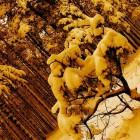 На Кузнецк и Сосновоборск обрушились желтые осадки