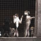 Владелец приюта для животных, где нашли 50 мертвых собак, получил от властей более 7 миллионов рублей