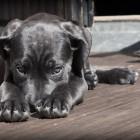 Задержан владелец приюта для животных, где нашли почти 50 мертвых собак