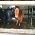 Пензенцев просят спасти лошадей от страшной смерти