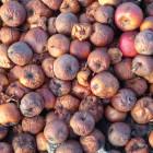 В столовой пензенской школы №60 детям раздали испорченные яблоки