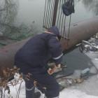 Пензенские спасатели вытащили из реки труп мужчины