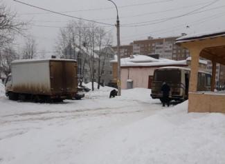 Пензенский цирк по неосторожности выпустил на улицу дикого зверя