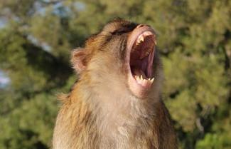 Цирковая обезьяна пензенского шапито изуродовала лицо двухлетней девочке
