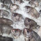 В Пензенскую область завезли рыбу, зараженную опасными личинками