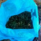 У жителя Кузнецка нашли 85 граммов запрещенного вещества