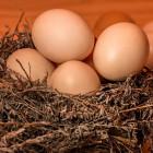 В Пензе повышение цен на яйца могло быть вызвано сговором местных производителей
