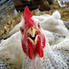 Пензенский фермер построит в области новую птицефабрику
