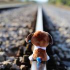 В Пензенской области 10-летняя девочка погибла под колесами поезда