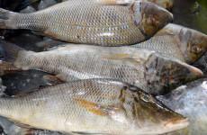 Ночная рыбалка окончилась для жителя Пензенской области уголовным делом