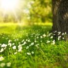 8 мая в Пензенской области воздух прогреется до +27ºС