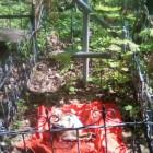 Безумный ритуал с обезглавленным петухом на кладбище шокировал пензенцев