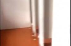 Скандал на ЕГЭ в Заречном – в кабинках туалета сняли двери и смотрели, как дети справляют нужду (ВИДЕО)