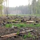 В Пензенской области ущерб от незаконной вырубки деревьев составил более 20 тысяч рублей