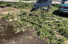 Коммунальщики вышли на улицы Пензы устранять последствия непогоды