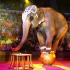 Пензенцы выступят за цирк без животных