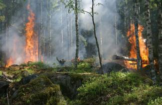 Пензенцев предупреждают о чрезвычайной пожарной опасности