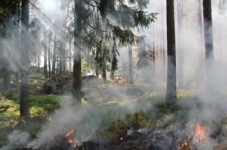 В Пензе сохраняется чрезвычайная пожарная опасность