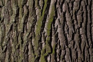 Черные лесорубы «наломали дров» в лесу на территории Кузнецка