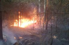 Крупный пожар в Пензенской области: огонь охватил 2,5 гектара леса