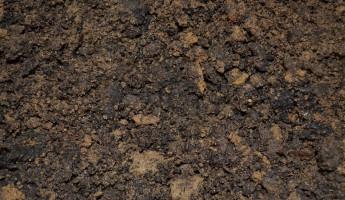 В Пензенской области число паразитов в почве в три раза выше нормы