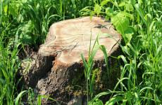 К сентябрю в Пензе спилят 850 аварийных деревьев