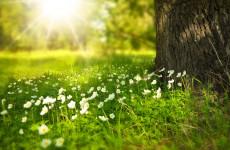 В Пензенскую область возвращается летняя погода