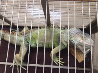 В Пензе на улице Рахманинова нашли бездомную рептилию