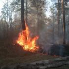 В Пензенской области ликвидировали лесной пожар