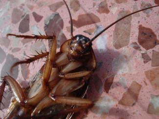 Закрытый город в Пензенской области штурмуют «засланные» тараканы