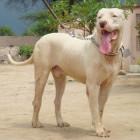 Российские власти назвали потенциально опасные породы собак. Список
