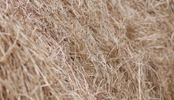 Под колесами телеги с сеном погиб 4-летний мальчик