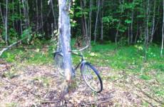 Появились фотографии с места страшной смерти лесоруба в Пензенской области