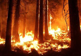 На тушение лесных пожаров выделят 6 млрд рублей