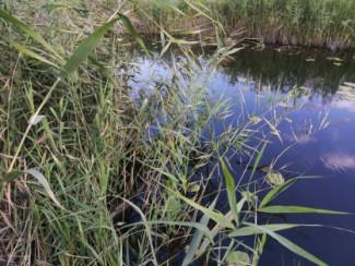 В Пензенской области утонули двое мужчин